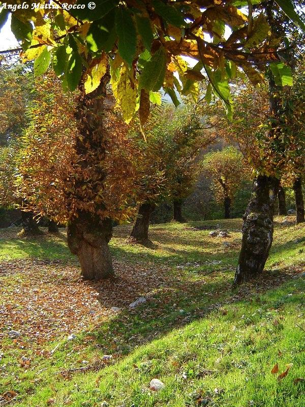 castagneti-bagnoli-irpino