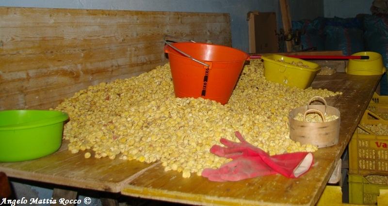 lavorazione-castagna-bagnoli-irpino-castagna-del-prete