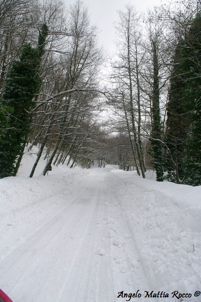 lago-laceno-nevicata-11-febbraio-2012i00005