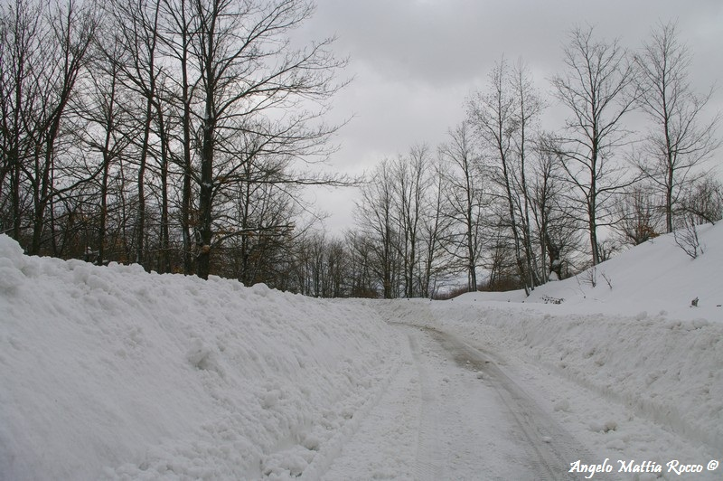 lago-laceno-nevicata-11-febbraio-2012i00006