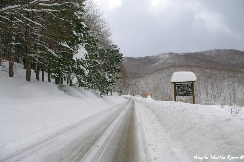 lago-laceno-nevicata-11-febbraio-2012i00010