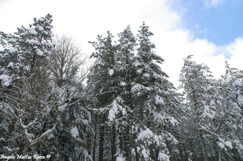 lago-laceno-nevicata-11-febbraio-2012i00013