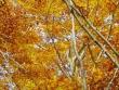 escursione-monte-cervialto-in-autunno-201200005