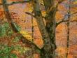 escursione-monte-cervialto-in-autunno-201200006