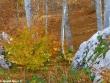 escursione-monte-cervialto-in-autunno-201200008