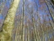 escursione-monte-cervialto-in-autunno-201200011