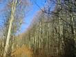escursione-monte-cervialto-in-autunno-201200013