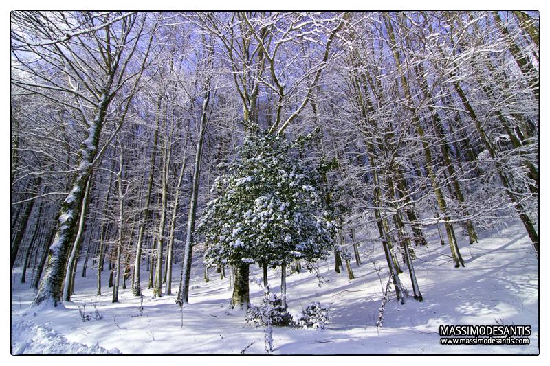 lago-laceno-gennaio-2012-31