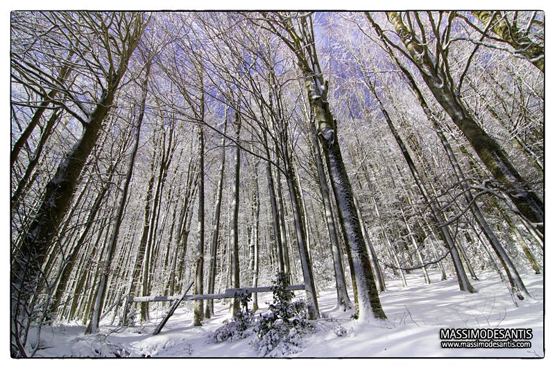 lago-laceno-gennaio-2012-32