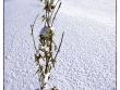 lago-laceno-gennaio-2012-13