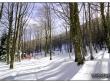 lago-laceno-gennaio-2012-34