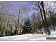 lago-laceno-gennaio-2012-38