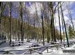 lago-laceno-gennaio-2012-39