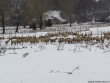 lago-laceno-neve-a-santo-stefano-10