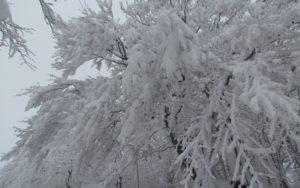 https://www.laceno.net/wp-content/uploads/2011/12/monte-raiamagra-laceno-8.jpg
