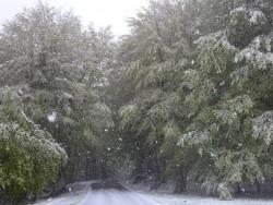 nevicata al laceno del 25 aprile 2016